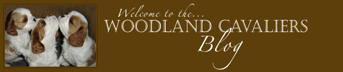 WOODLAND CAVALIERS